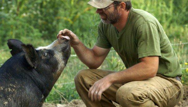 Bob y su cerdo