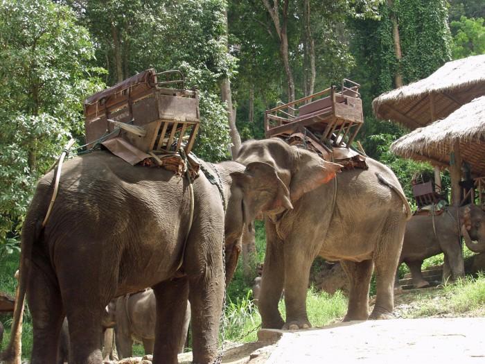 Elefantes con las sillas de trekking ©Elemotion