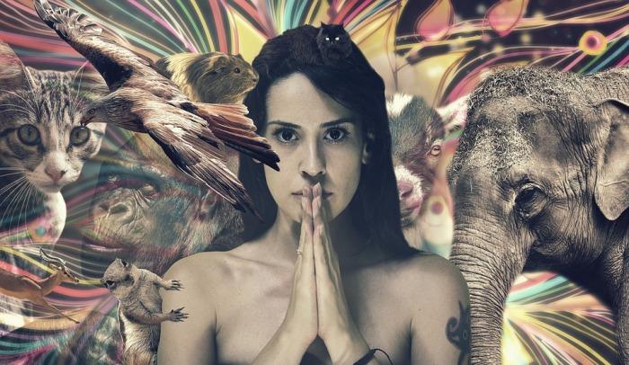 Activedia meditacion animales