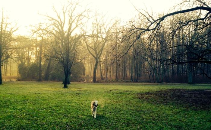 Kasey, la perra guía que es unespejo
