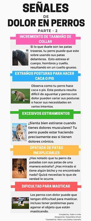 Señales dolor perro parte 2