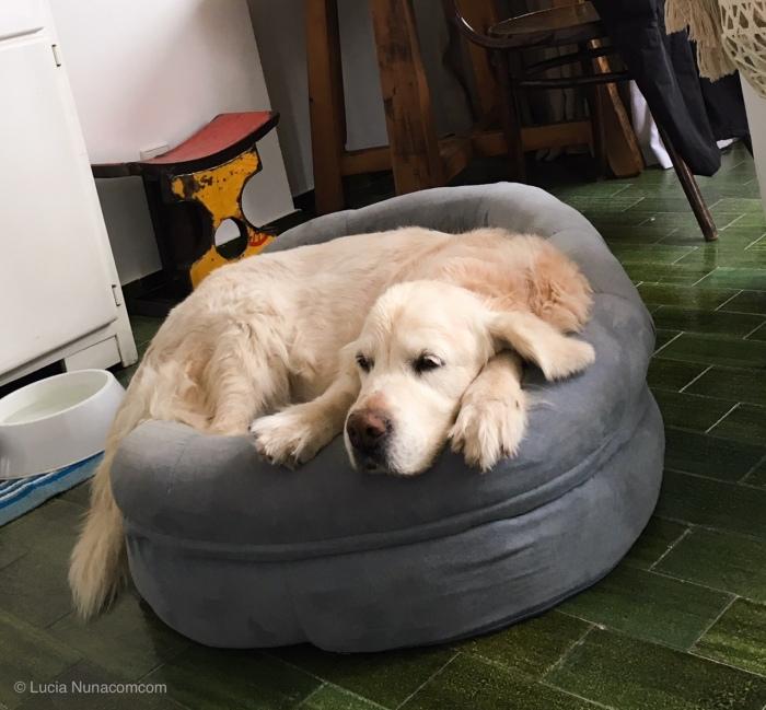 Mi perra no tiene ansiedad por separación, la tengoyo