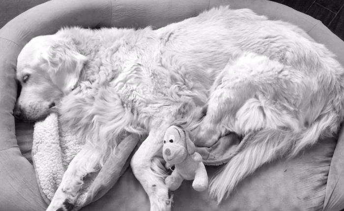 15 cosas que estás haciendo si convives con un animal enfermo, anciano… oambos