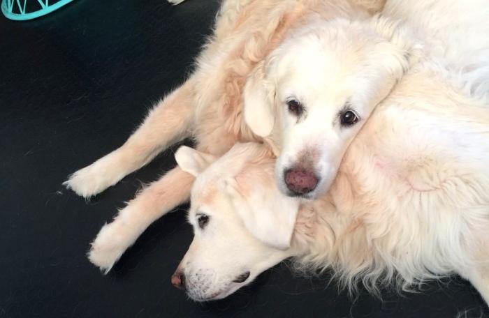 Baby pone su cabeza sobre Nuna